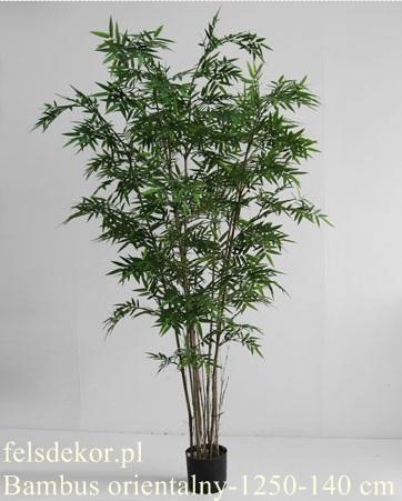 picture/bambus_orientalny_1250-140.jpg