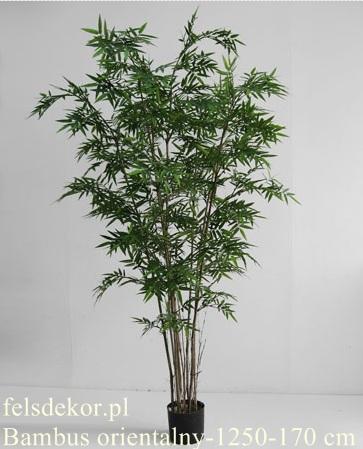 picture/bambus_orientalny_1250-170.jpg