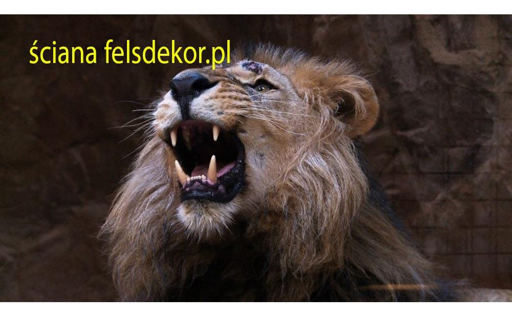 picture/felsdekor_2_dekorbet_copsa_kunstfelsen_decoflex_gdansk_zoo_lwy_08.jpg