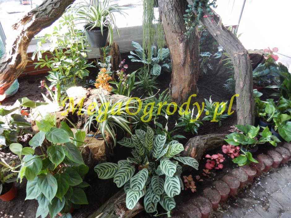 picture/felsdekor_dekorbet_copsa_decoflex_bydgoszcz_zoo_motylarnia_18.jpg