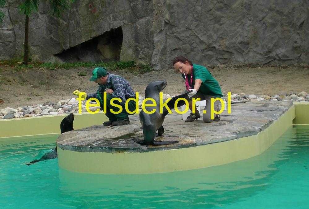 picture/zoo_wroclaw_foki_2_lata_sztuczna_skala_felsdrekor_kunstfelsen_14.jpg