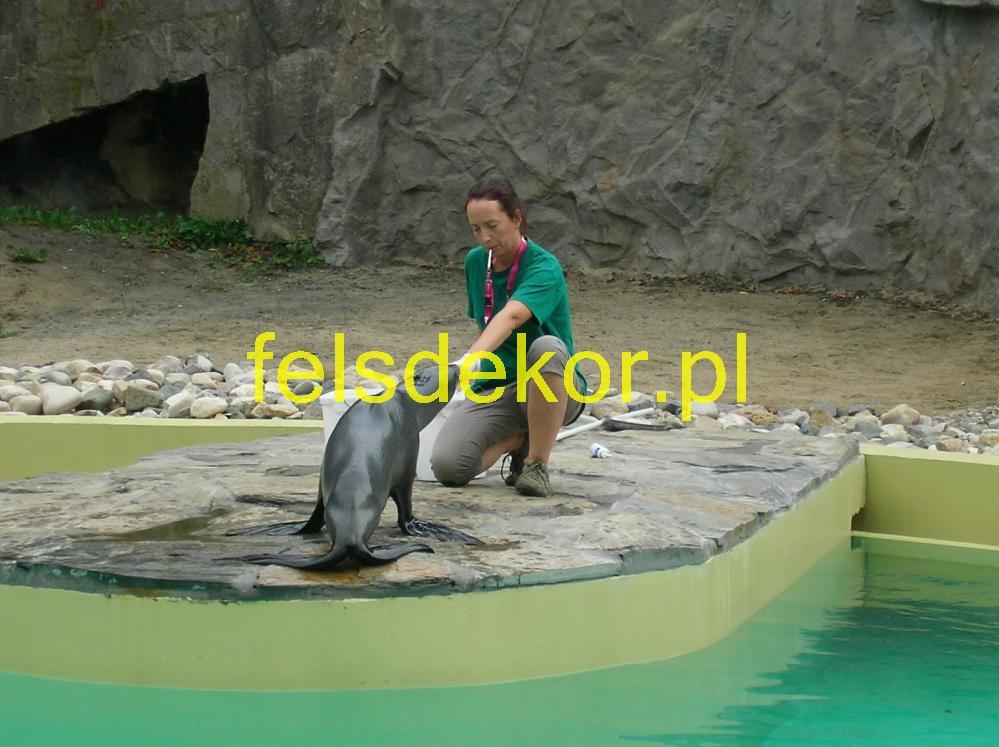 picture/zoo_wroclaw_foki_2_lata_sztuczna_skala_felsdrekor_kunstfelsen_15.jpg