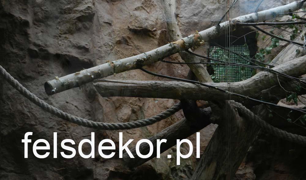 picture/zoo_wroclaw_ptaszarnia_felsdekor_kunstfelsen_10_lat_9.jpg